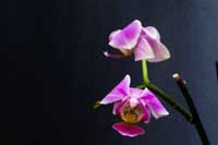 OrchidDepthFMBWeb.jpg