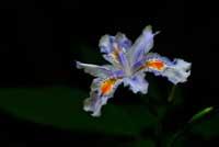 _Y125954_d4a2012-04-08_edited-3_750.jpg